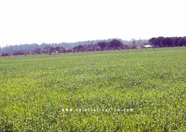 Buy Land in Corbett National Park