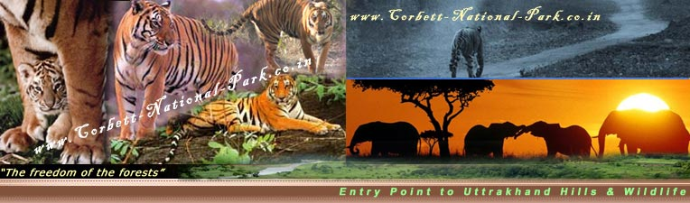 Corbett National Park Safari