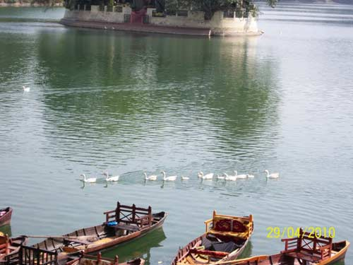 Ducks on Bhimtal Lake