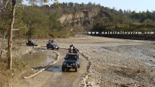 Jungle Tours in Nainital